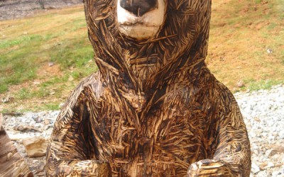 Brown Bear, Willy
