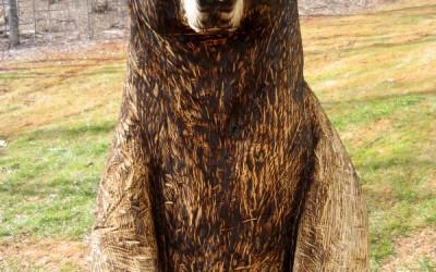 Brown Bear, Toby