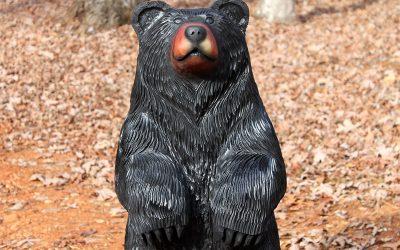 Cedar Black Bear