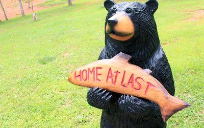 Home At Last Black Bear